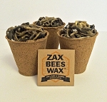 Zax Beeswax Natural Fire Starters